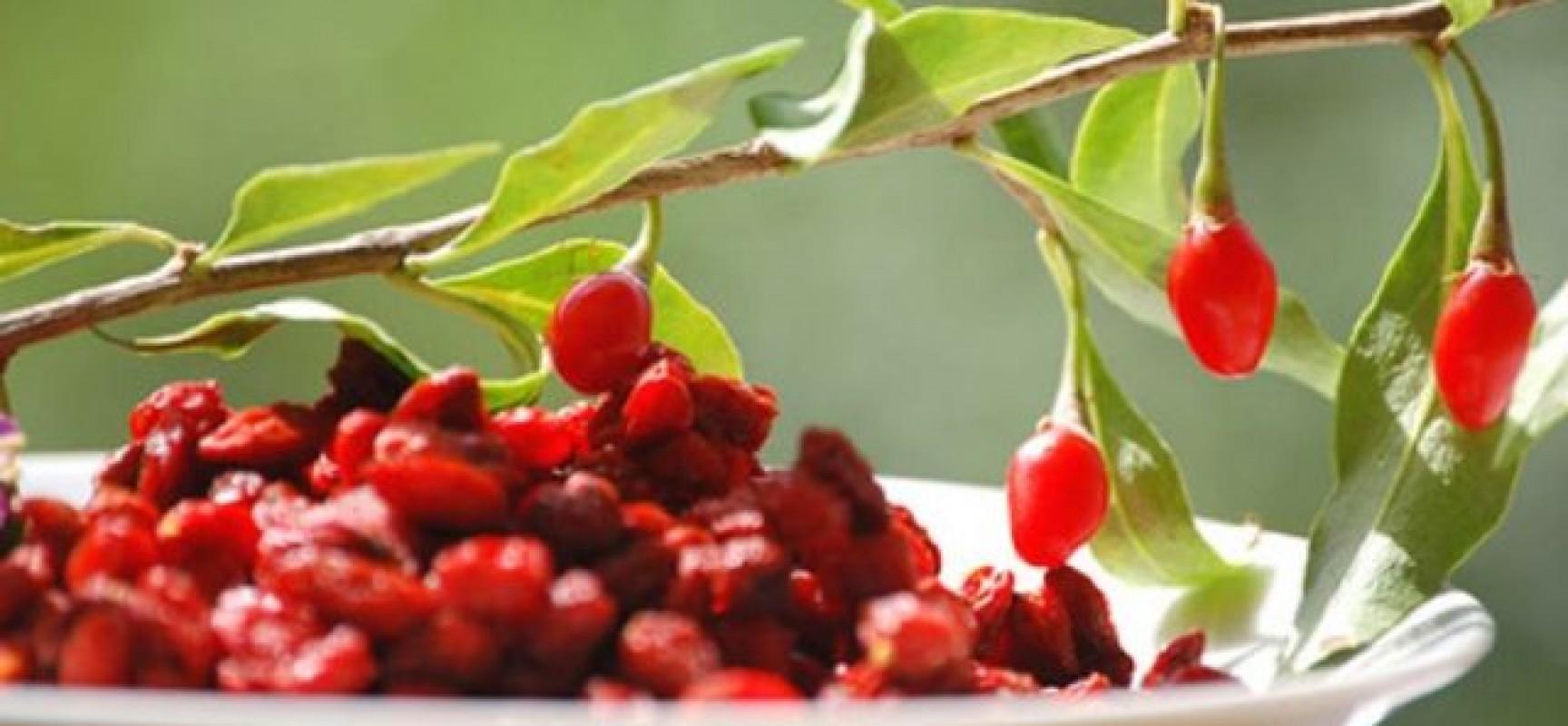 qual è il frutto per perdere peso