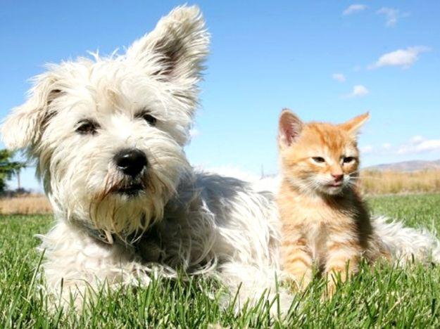 Prodotti naturali per combattere i parassiti di cani e atti