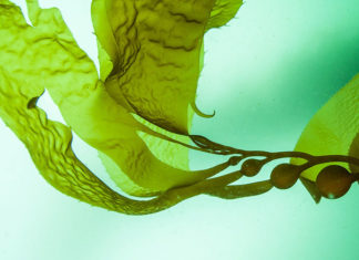 Trattamenti anti-age e antiossidanti con microalghe e insetti
