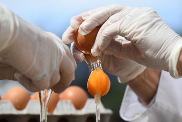 Uova a rischio fipronil