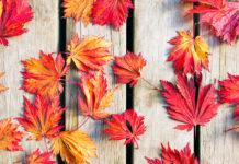Autunno, stress da cambio di stagione