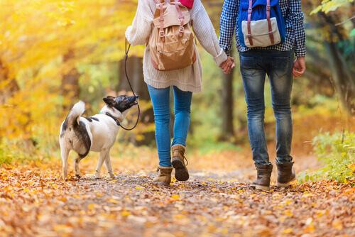 Passeggiare con il cane almeno mezz'ora al giono