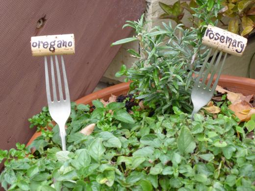 Piante aromatiche all'interno di un giardino sensoriale