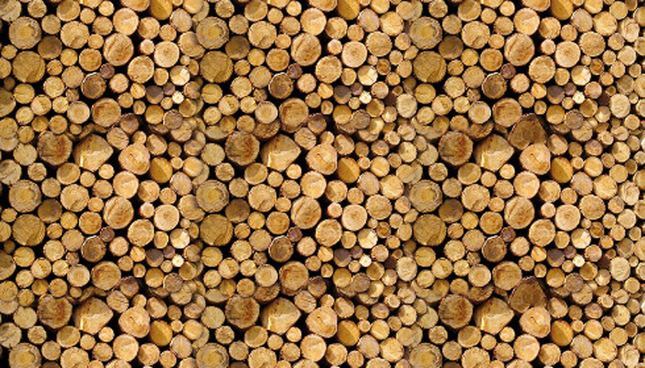 Importanza del legno nella vita dell'uomo