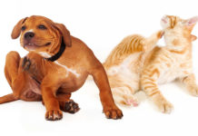Prodotti naturali per proteggere cani e gatti da pulci e parassiti