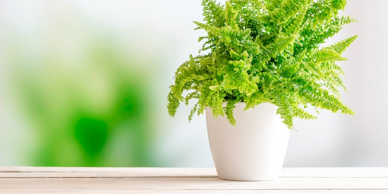 Piante da ufficio quali scegliere per il nostro benessere benessere alimentazione sana - Piante per ufficio ...