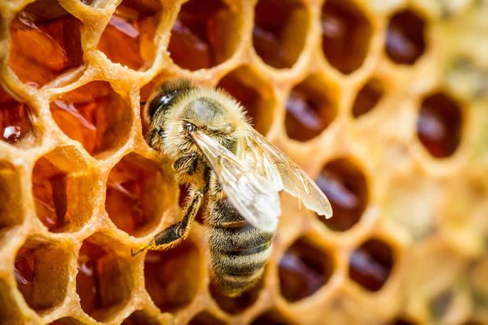 Miele inquinato da pesticidi