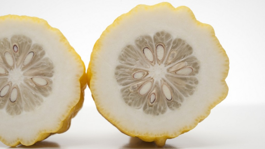 Canarone, incrocio ibrido tra cedro e limone