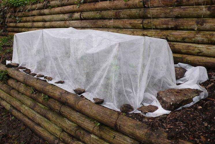 proteggere le piante in vista dell'inverno