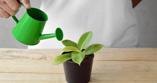 Mantenere umide le piante in casa