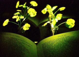 Piante luce