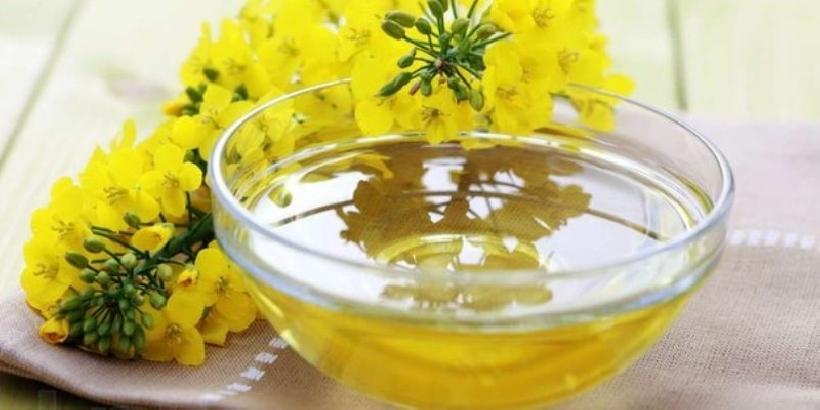 olio di camelina aiuta a depurare il fegato