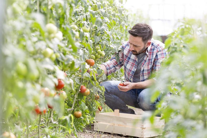 ortaggi e verdure di oggi sono privi di vitamine