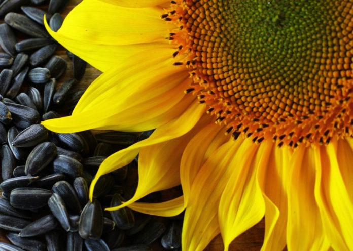 Cefalee e mal di testa, ecco quali sono le piante più efficaci