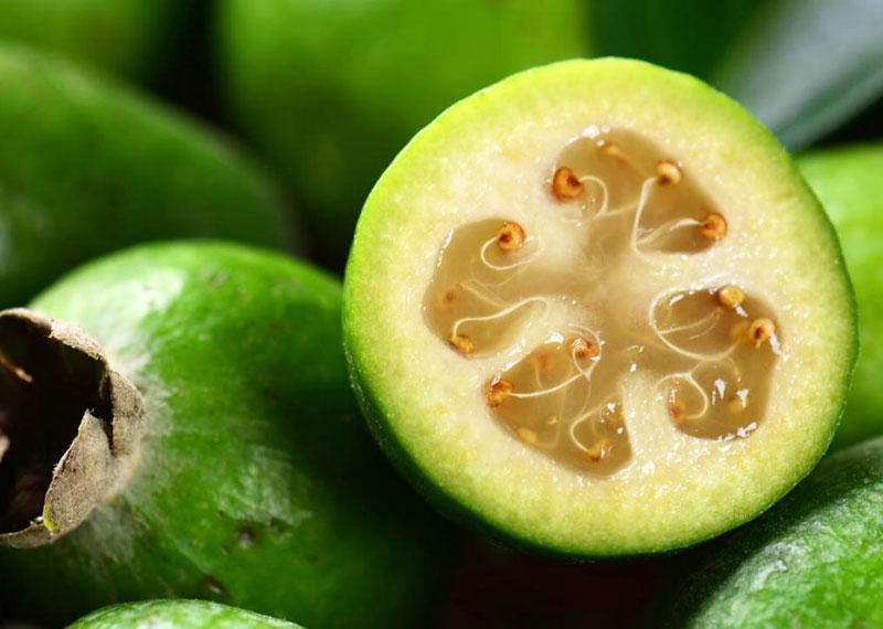 feijoa frutto esotico dalle molte propriet benefiche