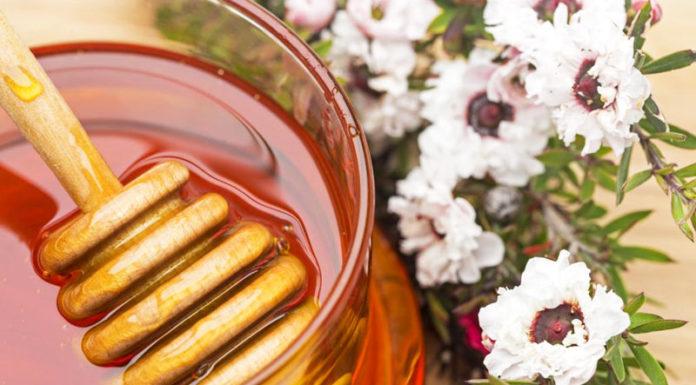 Miele di Manuka, potente antibatterico e curativo di molti disturbi