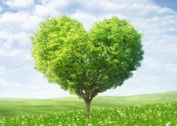 San Valentino, meglio se green ed ecosostenibile: idee per regali alternativi