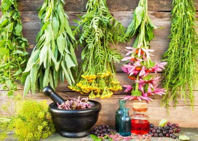 Le migliori erbe spontanee primaverili da utilizzare in cucina