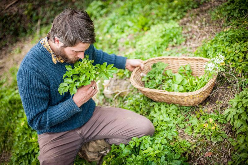 foraging, raccogliere cosa offre la natura