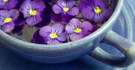 tisana alla primula e fiori di primavera