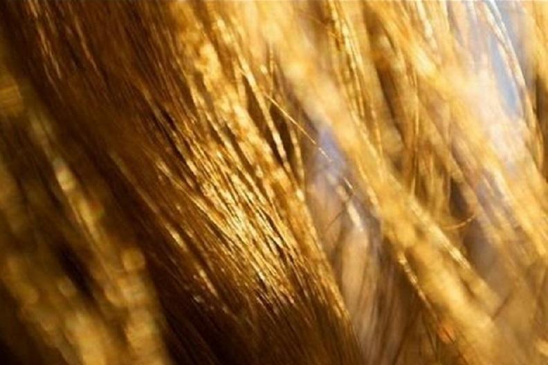 capelli schiariti