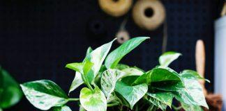 5 piante ideali da mettere in casa in autunno e come accudirle