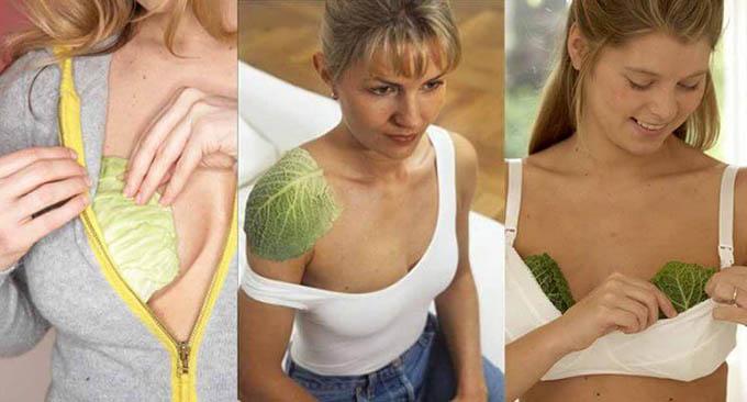 cavolo per impacchi al seno