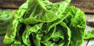 COme conservare a lungo l'insalata in frigo