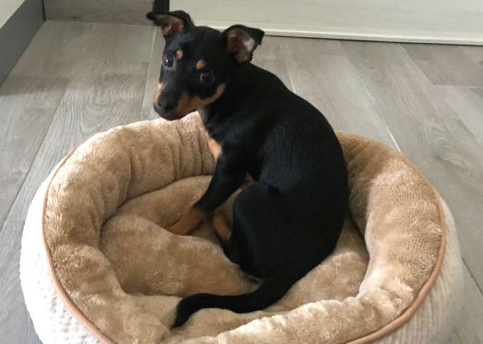 Cucce e cuscini per il benessere del vostro cane