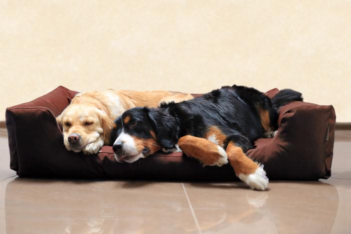 divano per cane