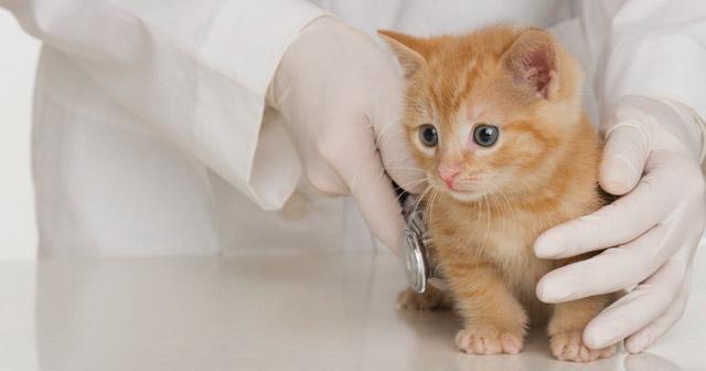multata per aver soccorso un gattino sulla strada