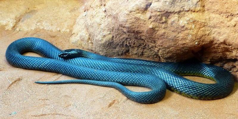 serpenti più velenosi al mondo per gli uomini