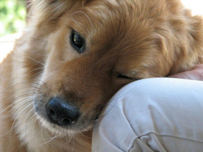 amore filiare verso il proprio cane o animale