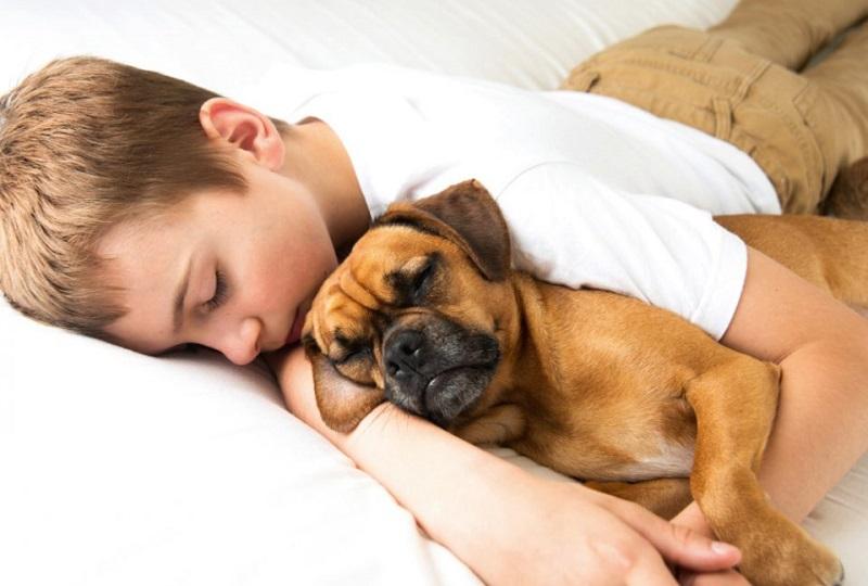 cuccioli di animali trattati come fratelli o figlioli