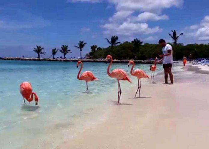 Fenicotteri rosa con le ali immobilizzate: orrore e animali sofferenti in nome dei selfie