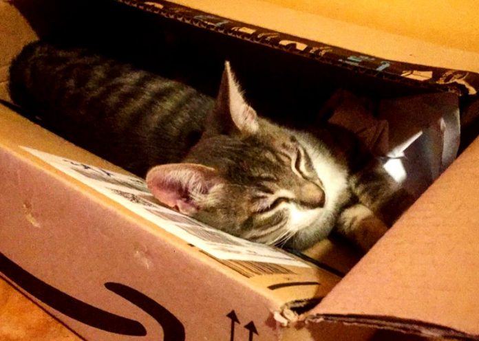 Gatto si nasconde in un pacco natalizio e viene spedito per 1200 km