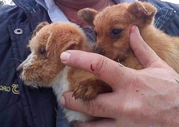 macchinista eroe ferma treno per salvare 2 cuccioli di cane