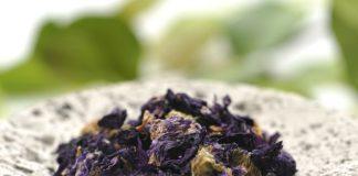 Malva, 5 ricette benefiche per curare l'organismo