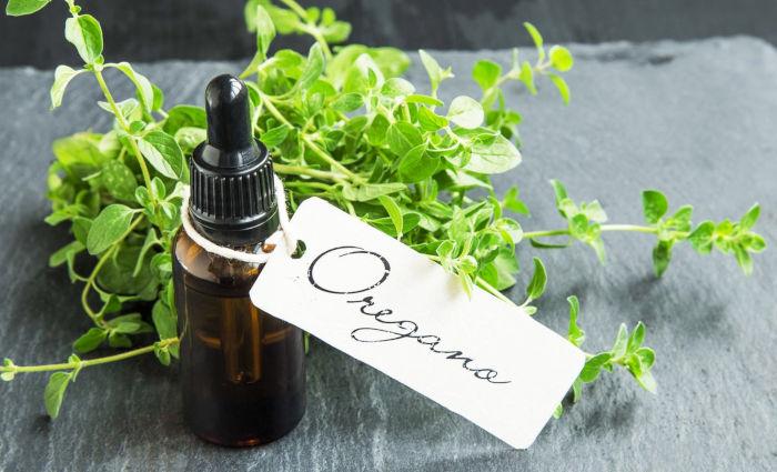 Olio essenziale di origano, antibiotico naturale