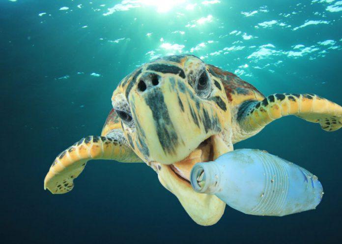 Plastica monouso addio: l'Europa ne farà a meno a partire dal 2021