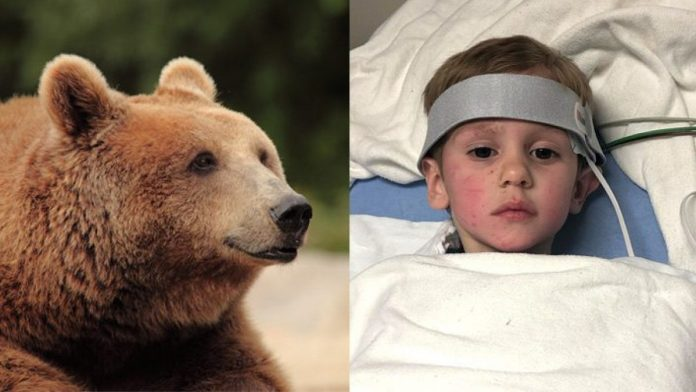 Bimbo di 3 anni sopravvive nel bosco a -20°C grazie a un orso