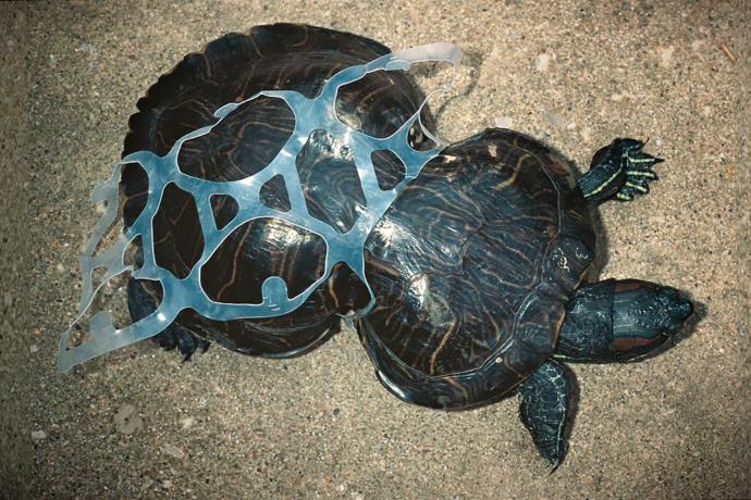 Anelli di plastica nell'ambiente: ecco le atroci morti che provocano negli animali