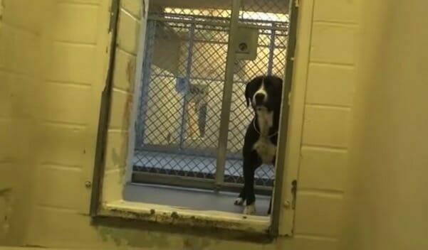 la storia vera di Benny, cane in un canile