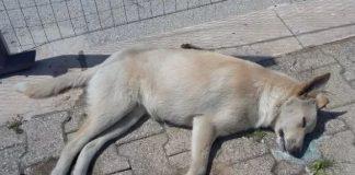Donna confessa alla padrona di aver avvelenato il suo cane