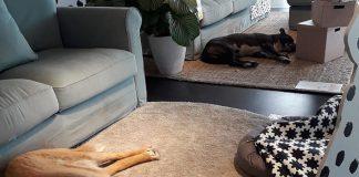 Morto Bull, il cane che viveva tra i mobili dell'Ikea di Catania