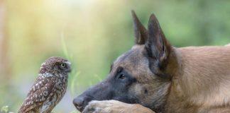 Immagini tenerissime di amicizia tra animali diversi