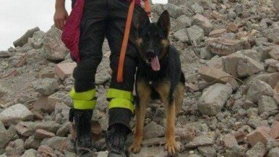 Morto Falco, il cane eroe di Rigopiano