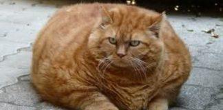 Un gatto di 6 chili precipita da un balcone e arriva in testa ad un passante
