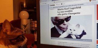 Cerca di convincere il proprio gatto a corteggiare la gatta di Lagerfeld per beccarsi l'eredità