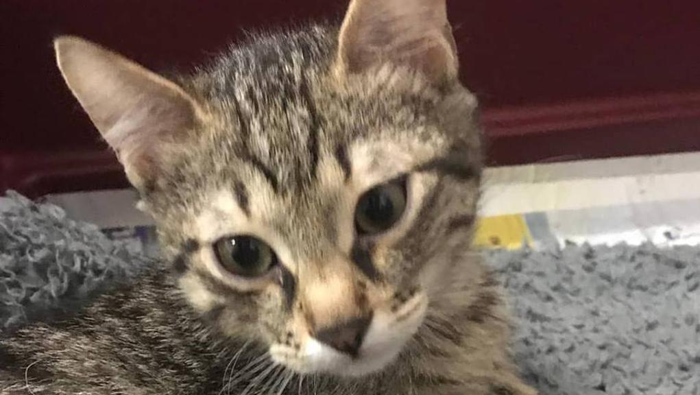 il piccolo gatto Geremia